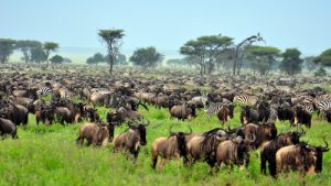 3 Days Wildebeest Migration Safaris