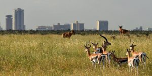 4 Days Nairobi National Park & Amboseli Safari